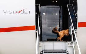 Vista Jets welcome pets onboard via their VistaPet program — BEAM ...