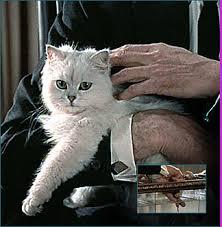 Blofeld`s cat a Persian