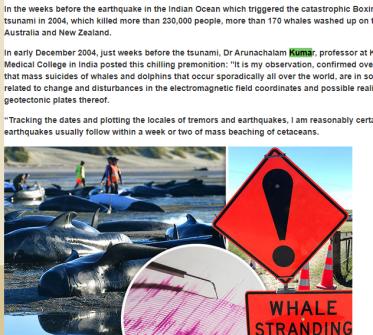 Whale Strandings the Indonesian seismic triangle – BEN VIDGEN THE DYSLEXIC  DETECTIVE